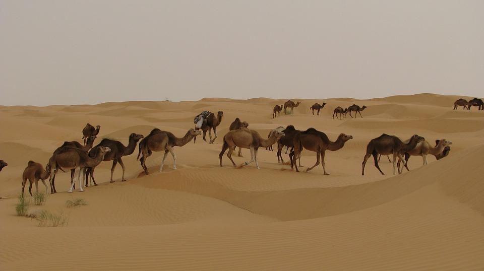 wyjazd do Tunezji